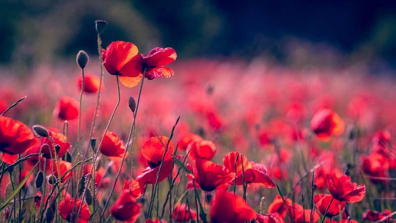 Blumen düngen