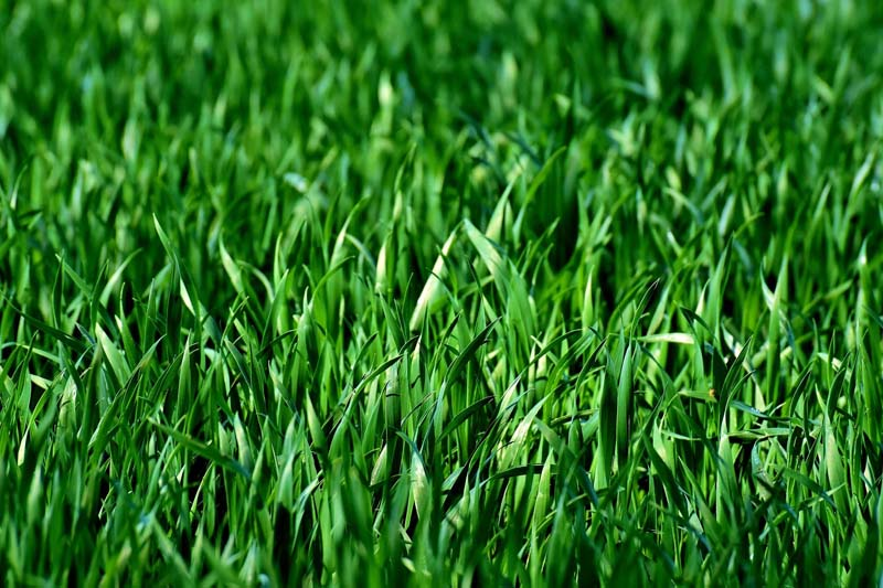 Dünger für Rasen