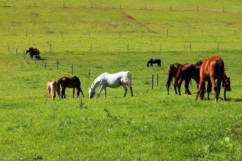 Dünger für Pferdeweide