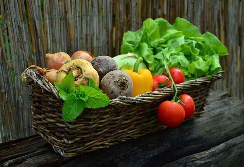 Gemüse düngen
