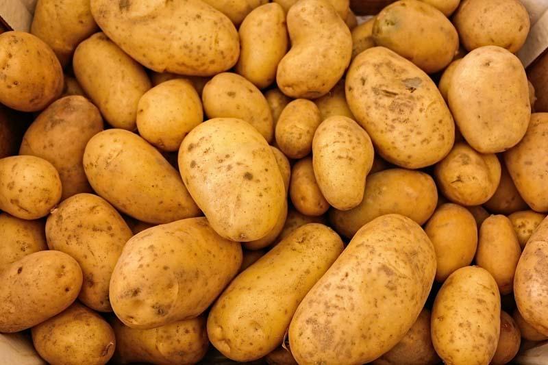 Dünger für Kartoffeln